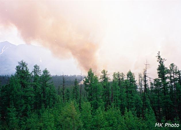 Презентации по обж пожар обж лесные